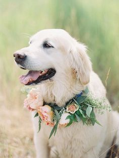 So naturally any wedding that has a gorgeous pup in it captures my heart and this beautiful mountain wedding by MONTANA WEDDING PHOTGRAPHERS JEREMIAH AND RACHEL has done that and then some! I mean come on, how cute is their adorable retriever, … Continu