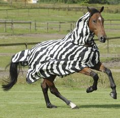Bucas Buzz-Off Full Neck Zebra Fly Rug-Bucas zebra print Buzz-Off fly rug with full combo neck. Dress our horses up like zebras this summer and keep them fly free, really?!