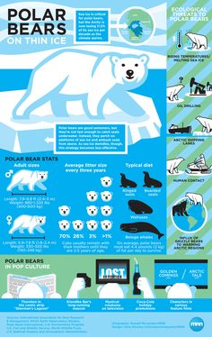 The Polar Ice-caps are melting, rendering the Polar bears and the other Arctic animals homeless.