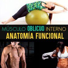 Músculo Oblicuo Interno Del Abdomen: Anatomía Funcional Y Ejercicios - La Guía Definitiva - La Guía de las Vitaminas