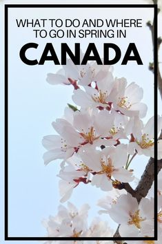 Spring in Canada: Things to Do, Where to Go and Essential Travel Advice – Best Travel Destinations Canada Destinations, Top Travel Destinations, Amazing Destinations, Travel Advice, Travel Tips, Travel Guides, Online Travel Agent, Visit Canada, Canada Trip