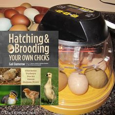 The Chicken Chick®: Hatching & Brooding Your Own Chicks by Gail Damerow, Book Review
