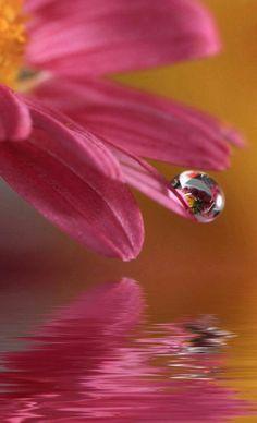 Drops #gotadeagua #water