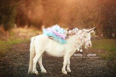 Loni Smith Photography