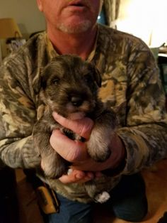 November 22nd pic taken Mini Schnauzer born October 31st :)  3 weeks old!  Most likely will name her Winnie