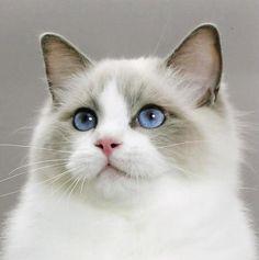Gorgeous cat.