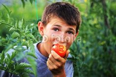 Luckily this has never happened to me, but I have met other people wondering why they have bitter tasting garden tomatoes. So why would tomatoes taste bitter, or even sour? Find out with the information found in this article. Growing Tomatoes, Growing Vegetables, Garden Tomatoes, Chocolate Shoppe, Sour Taste, Summer Tomato, Tomato Plants, Plant Care, Bitter