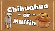 It is strangely eerie how similar a Chihuahua's face and a muffin top look when blurry! See if your students can identify which is which. There are multiple ways to play this screen game, but the key to the game is speed. Use the included Sunday School, Middle School, Youth Ministry Games, Fun Games, Shout Out, Chihuahua, Muffin Top, April Fools, Muffins