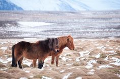 Hinrich Carstensen Photography » Iceland Road Trip - Icelandic horses