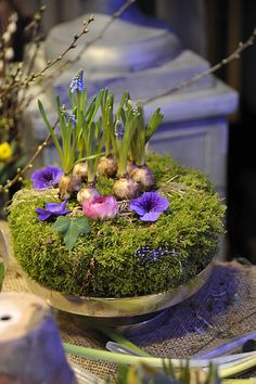 Moss and bulbs to welcome spring