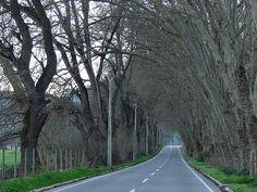 Pelvin, Peñaflor - Chile