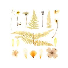 pressed flowers by quercus design