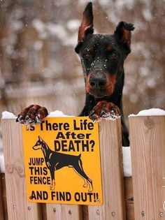 Funny Beware Of Dog Sign I Love Dogs Cute Silly