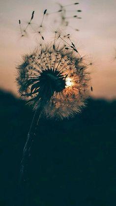 Sonhos e dedicação são uma poderosa combinação  ——————