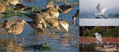 Audubon Overlook is located in Los Osos It happens every year. Summer ends, the days become crisp and clear and the birds return to Morro Bay. The National Audubon Society lists Morro Bay as a Globally Important Bird Area and it is also a part of the National Estuary Program. Fall and winter seasons bring …
