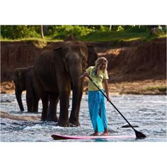 SURF with elephants! Worthy of the bucket list. Sup Stand Up Paddle, Sup Paddle, Sup Surf, Upper Body Cardio, Elephants Never Forget, Surf Gear, Sup Yoga, Standup Paddle Board, Elephant Love