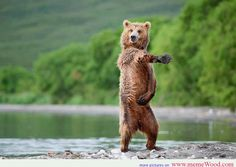 wet bear dance style funny animals