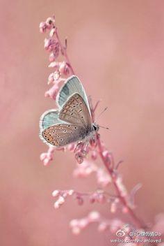 蝶…_来自什么都想拖回家的图片分享-堆糖网