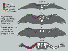 dragon wing anatomy - Google Search