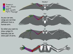 dragon wing anatomy - Google Search