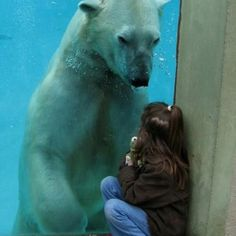 Polar bear and girl! Unfortunately that polar bear is probably thinking that little girl would make a good snack Animals And Pets, Funny Animals, Cute Animals, Wild Animals, Baby Animals, Large Animals, Beautiful Creatures, Animals Beautiful, Tier Fotos