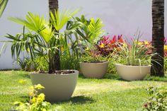 Plant pots of Rhapis excelsa, Chamaedorea elegans.