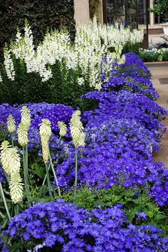 beautiful purple and white border