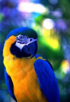 Macaw, Caribbean Did you know these birds live to be 100 years old?!! Amazing.