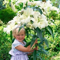 Lily Pretty Woman - Orienpet Lilies - Hardy Lilies - Flower Bulb Index Bulb Flowers, Large Flowers, White Flowers, Exotic Flowers, Colorful Flowers, Low Growing Shrubs, Trumpet Lily, Narcisse, Exotic Beauties