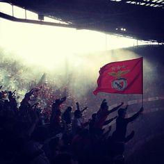 SL Benfica TriCampeão Nacional 2015/2016 - page 967 - Geral - SerBenfiquista.com - Fórum de adeptos do Sport Lisboa e Benfica