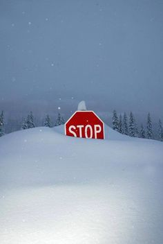Snow - Durango, Colorado No, don't stop.let it snow! Winter Szenen, I Love Winter, Winter Magic, Winter Christmas, Winter Colors, Blue Christmas, Country Christmas, I Love Snow, Let It Snow