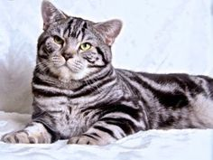 Szuszi Cat Kennel: Kiscicák Cat Kennel, Cats, Animals, Gatos, Animales, Animaux, Animal, Cat, Animais