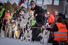 https://flic.kr/p/mf6mG1 | geirstian-0450 | Finnmarkslopet 2014, Longest sled dog race i Europe www.finnmarkslopet.no