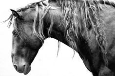 wild stallion, print available in extra large sizes (small too).  portion of proceeds to www.returntofreedom.org