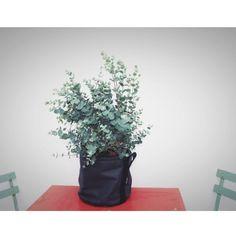 Rise And Shine | Combo parfaite : Bacsac x Eucalyptus
