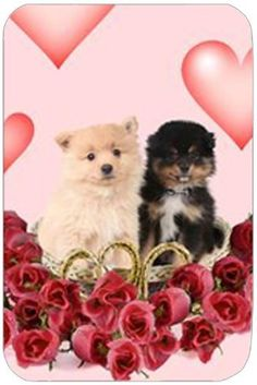 Pomeranian Tempered Large Cutting Board by Doggie of the Day, http://www.amazon.com/dp/B004MJ2AY4/ref=cm_sw_r_pi_dp_rLLerb15657AW