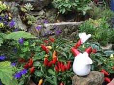 #4 Plants, Flora, Plant