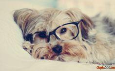 Карликовые собаки