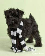 Turbo (Miniature Schnauzer) - Life is pretty black and white for Turbo....this is a very cute puppy