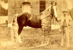 1. Oregon Long-Haired Wonder Horses were known for their rich chestnut color and amazingly long manes and tails.
