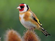 Ubud, Creatures, Birds, Nature, Animals, Beautiful, Sweet, Gardens, Candy