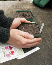Renee's Garden~ When to start seeds indoors... great website ~ helpful article