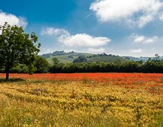 Working On Myself, New Work, Behance, Mountains, Gallery, Check, Nature, Travel, Tuscany