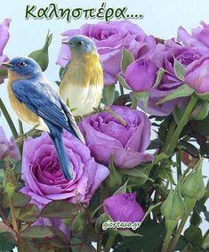 Good Night, Good Morning, Greek Language, Bird, Animals, Irene, Greek Sayings, Nighty Night, Buen Dia