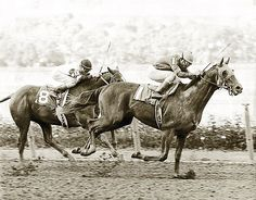 Alydar gets the best of Affirmed in This win set the record for the most wins by an owner. Calumet Farm had winners in 1949 and Saratoga Horse Racing, Calumet Farm, The Belmont Stakes, Triple Crown Winners, Sport Of Kings, Thoroughbred Horse, Racehorse, Horse Love, Beautiful Horses