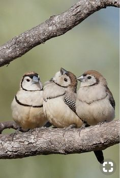 New Robin Bird Flying Pictures 18 Ideas - Pets World All Birds, Little Birds, Love Birds, Pretty Birds, Beautiful Birds, Animals Beautiful, Robin Bird, Young Animal, Colorful Birds