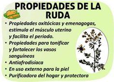 Propiedades medicinales de la planta ruda y remedios