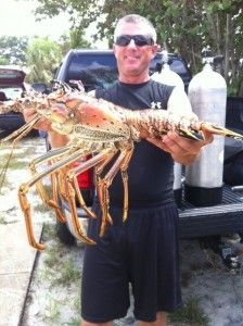 Bugging out -- a ridiculously big lobster polled out of Sebastian Inlet during the 2012 mini season.