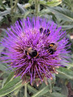 Wordless Wednesday – A buzzing garden