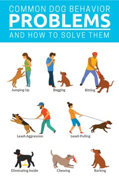 10 Common Dog Behavior Problems And How To Solve Them. See the latest and most time tested strategies to train your dog out of bad habits.